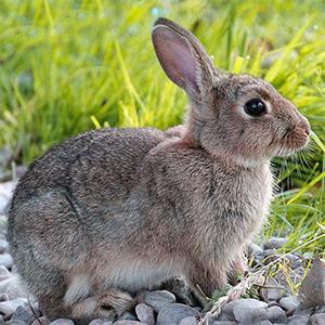 Imagen de un conejo en la hierba